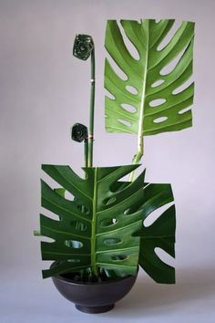 "Never saw monstera used this way. What interesting ikebana. ""Ikebana by… Arte Floral, Deco Floral, Floral Design, Ikebana Arrangements, Modern Flower Arrangements, Arreglos Ikebana, Sogetsu Ikebana, Fleur Design, Japanese Flowers"