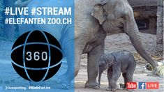 The Zoo, Live Stream, Smartphone, Elephant, Facebook, Twitter, Videos, Youtube, Animals