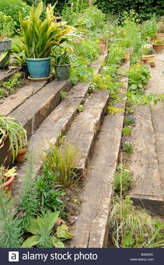 Stock Photo - Garden wooden sleeper terrace and steps planted up with annuals perennials and container plants UK July Garden Stairs, Terrace Garden, Garden Paths, Tiered Garden, Wooden Garden, Sleepers In Garden, Prairie Planting, Hillside Landscaping, Railroad Ties Landscaping