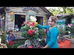 YouTube Desert Rose Plant, Youtube, Companion Planting, Small Gardens, Holiday Decor, Floral, Desert Flowers, Replant, Gardens