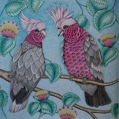 Flamingo From Animal Kingdom Colouring Book