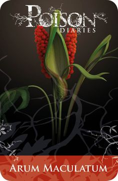 Poisonous Plants:  Arum Maculatum. Deadly Plants, Poisonous Plants, Poison Garden, Gothic Garden, Kitchen Witchery, Hedge Witch, Herbal Essences, Kraut, Medicinal Plants