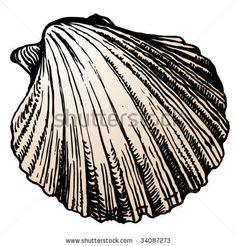 scallop shell by Pirha, via ShutterStock