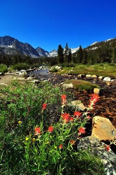 Would you like tips on things to do when going to Yosemite Park in California, USA? Simply click right now to see some excellent info. Bishop California, California Dreamin', California National Parks, Yosemite National Park, Yosemite Mountains, Sierra Nevada, Trout Fishing, Beautiful Landscapes, Wilderness