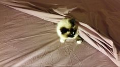Helping to make the bed.......