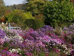 John Grimshaw's Garden Diary: Michaelmas daisies at Old Court Nurseries