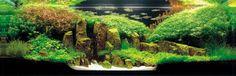The World's Largest Nature Aquarium and Aquatic Plants Layout Contest Aquarium Garden, Nature Aquarium, Planted Aquarium, Paludarium, Vivarium, Aquascaping, Aquatic Plants, Betta Fish, Fish Tank
