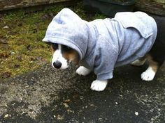 what up hoodie dog; @Cassandra Dowman Davidson-wright you have to do this for herc!