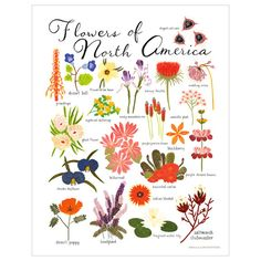 """Los Angeles artist Keiko Brodeur illustrated this beautiful collection of flowers indigenous to North America in gouache and you can get them on this 11"""" x 14"""" archival print. Printed in the USA on so"""