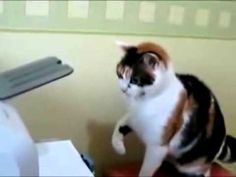 Hahaha Funny Cat Angry Repair Printer
