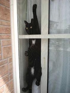 d621d334fa2 68 beste afbeeldingen van =^..^= Screendoor cats - Cats, Cool cats ...