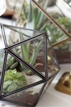 Icosahedron terrariums http://www.craftandcouture.com/2013/12/diy-geo-tabletop-terrariums.html