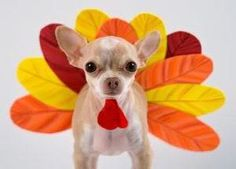 Check out the following tips from ASPCA experts for a fulfilling Thanksgiving that your pets can enjoy, too.   http://www.aspca.org/pet-care/pet-care-tips/thanksgiving-safety-tips.aspx