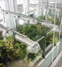 Plant Research | Biotron