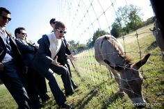 This gets me every time! You give the groomsmen ANY free time at a 35 acre ranch and of course they'll find the donkeys. So funny!! Copyright © Chris Wineinger Photography www.chriswphoto.com #agaveestates #boyswillbeboys