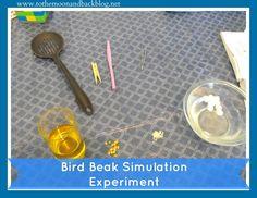 Simulated Bird Beak Experiment