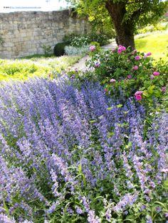 Epic Lavender at the Baroque Gardens Blankenburg Harz Mountains Germany