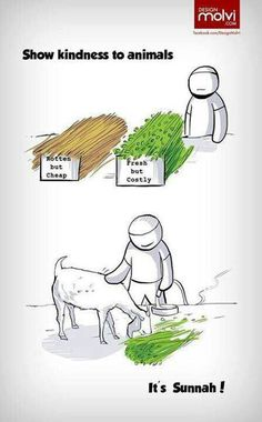 Show kindness to animals, it's sunnah. Animal rights in Islam Islamic Teachings, Islamic Love Quotes, Muslim Quotes, Islamic Inspirational Quotes, Religious Quotes, Hindi Quotes, Quran Quotes, Hadith Quotes, Islamic Dua