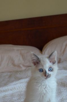 50 Kittens Giving You Kitty-Cat