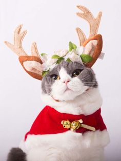 Funny Animal Picdump of The Day 1 Photos) Cute Cat Costumes, Pet Halloween Costumes, Pet Costumes, Christmas Costumes, Cosplay Costumes, Christmas Kitten, Christmas Deer, Christmas Animals, Christmas Scenes