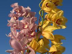 fondos de pantalla - Orquídeas: http://wallpapic.es/naturaleza/orquideas/wallpaper-10243