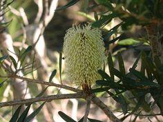 Flora at 41 south tasmania