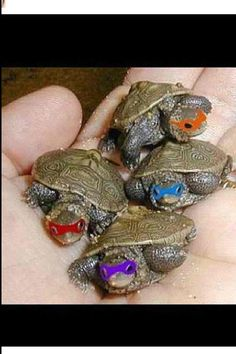 Ninja Turtles, I would say if the boys find baby turtles again this summer this could be what happens to them...before they get put in the fish pond! :-)