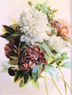 Pierre Joseph Redouté. Flowers