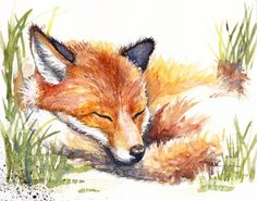 Original Watercolour Painting by Be Coventry,Animals,Realism, Snoozing Fox