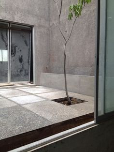 Process: courtyard with picked concrete flooring and tree and unfinished walls. Concrete Floors, Condo, Walls, Windows, Flooring, Modern, Oaxaca, Trendy Tree, Concrete Floor