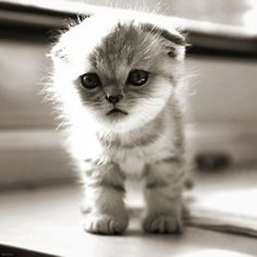 Oh why, Oh why must we wait to get a kitten!!!