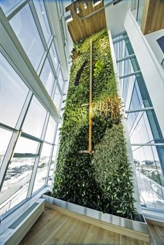 """This wall spans a total area of 2,139 square feet (198 sq m). """"World's tallest"""" interior living wall unveiled in Quebec"""