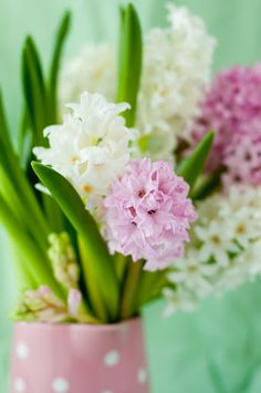 Hyacinths. Absolutely. Love. I think of my great grandma Nanny ever spring!