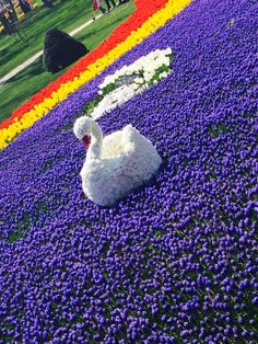 Tulips are beautiful in Emirgan Park Tulips, Kids Rugs, My Favorite Things, Park, Spring, Beautiful, Home Decor, Decoration Home, Kid Friendly Rugs