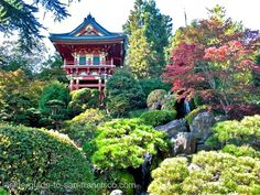 The Japanese Tea Garden in San Francisco, California, is a popular feature of Golden Gate Park, originally built as part of a sprawling World's Fair, the California Midwinter International Exposition of 1894. The oldest public Japanese garden in the United States, this complex of many paths, ponds and a teahouse features native Japanese and Chinese plants. The garden's 5 acres contain many sculptures and bridges. Tours of the garden are given daily.