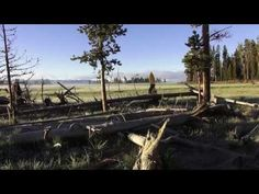 ♥♥ Sunrise Songbirds at Yellowstone (2 hours)
