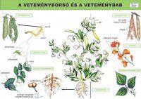 Montessori, Environment, Lily, Teaching, Education, School, Botany, Plants, Orchids