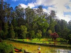 A quickie in Ooty: Why we recommend Ooty holidays to everyone?