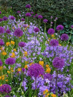 Great Dixter Flower Garden. Wonderful colour combination!