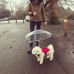 Petshy New Transparent Pet Umbrella Dog Cat Portable Removable Rain Gear With Leads Leash Outdoor Dog Raincoat Pets Accessories Dog Harness, Dog Leash, Dog Umbrella, Pet Dogs, Dog Cat, Dog Raincoat, Rain Gear, Raincoats For Women, Outdoor Dog