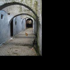 Arco y gato en la Medina de Tetuán, Carlos Cuerda