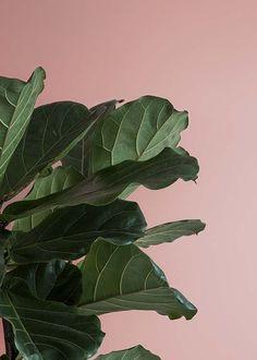 Pink and green two Plakat i gruppen Plakater / Fotokunst hos Desenio AB Green Leaves, Plant Leaves, Desenio Posters, Pink Plant, Nature Posters, Botanical Prints, Botanical Posters, Colorful Plants, Modern Art Prints