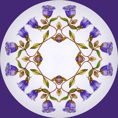 Mandala of endemic bellflower, Campanula pelviformis, found in eastern Crete during May and early June. Prints available at 50 euros, original watercolour 500 euros.