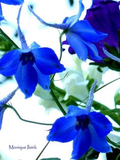 Blue flower. Possible for wedding bouquet?