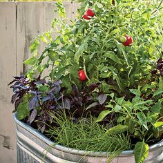 one-pot vegetable garden + other container ideas