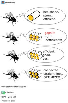 straight lines. Why beehives hexagons. OPTIMIZED are good - iFunny :) Stupid Memes, Dankest Memes, Funny Memes, Hilarious, Animal Memes, Funny Animals, Cute Animals, Lol, Pokemon