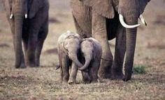 Los elefantes son de las criaturas mas emocionales del planeta Muchos humanos han perdido esa condicion