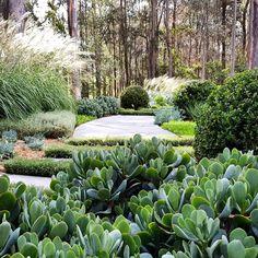 Urban Garden Design Planting layers starting to make themselves known for our design studio garden - Landscape Design Plans, Garden Design Plans, Tarzan Und Jane, Australian Native Garden, Coastal Gardens, Sloped Garden, Garden Shrubs, Garden Plants, Design Studio