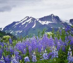 Wildflowers In Crested Butte Colorado by Bronze Riser ...