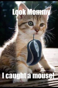 Caught a mouse? #funnycats #catmemes #funnymemes http://www.nojigoji.com.au/